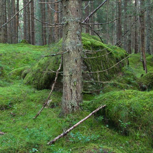 6DS_2335-Norway-Forest-Wild-Wood-Green-Moss-III