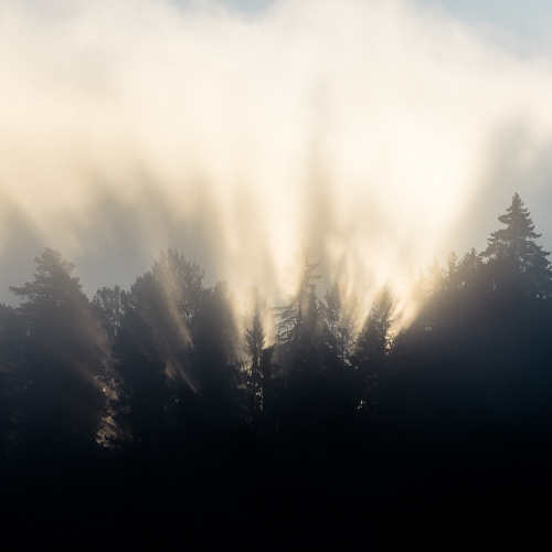 cga_2183-spruce-in-morning-sun-and-mist-norway-i