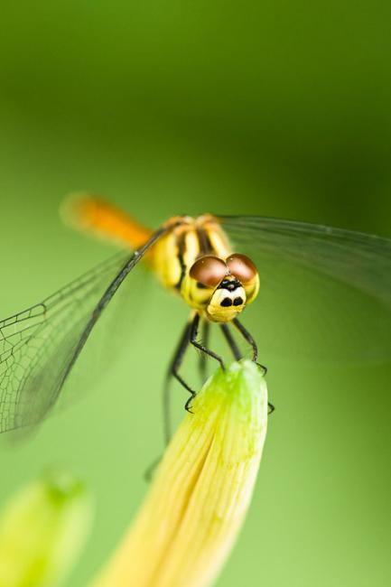 Dragonfly in yellow and green environment
