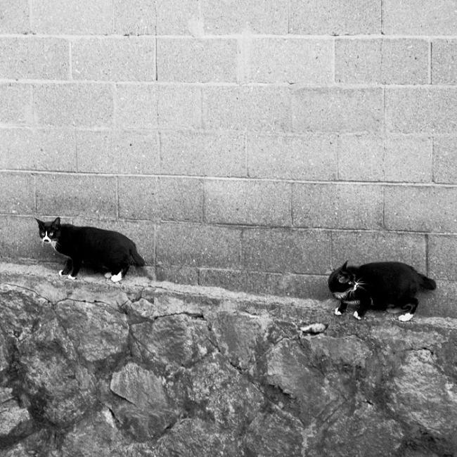 Two suspicious cats sneaking around