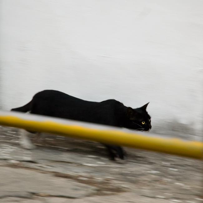 Black cat sneaking behind yellow fence