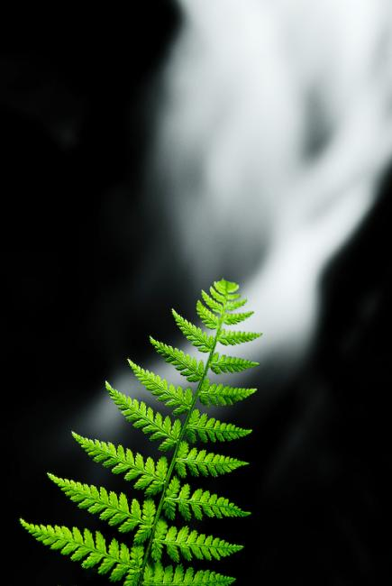 Green fern and blurred waterfall