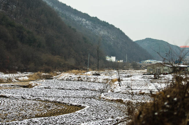 Frozen rice paddies