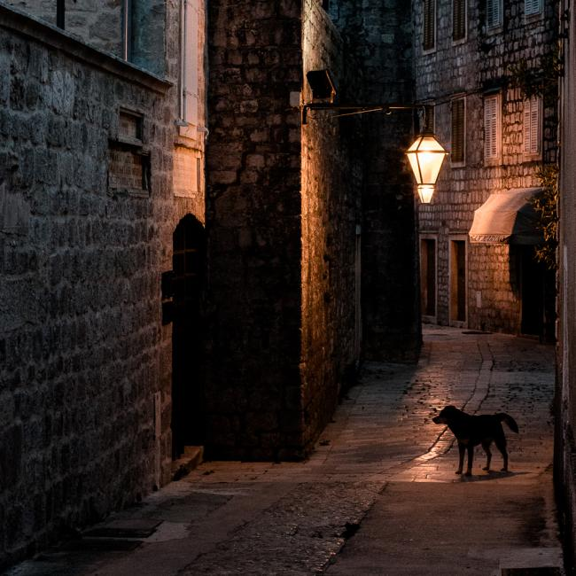 A dog in a street during night, Stari Grad