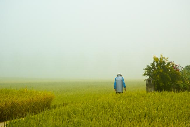 Morning walk through the rice field